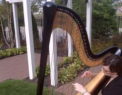 Northern Indiana Harp Musician