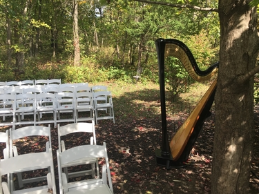 Wedding Harpist Movies