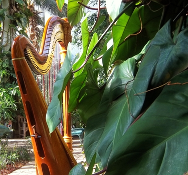 Harpist in Rock Island, Illinois