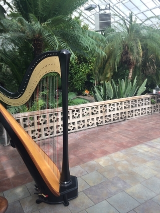South Bend Wedding Harpist - Potawatomi Greenhouse Ceremony