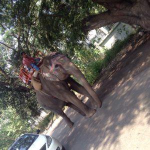 More elephant!