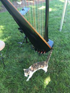 Harp at Cat