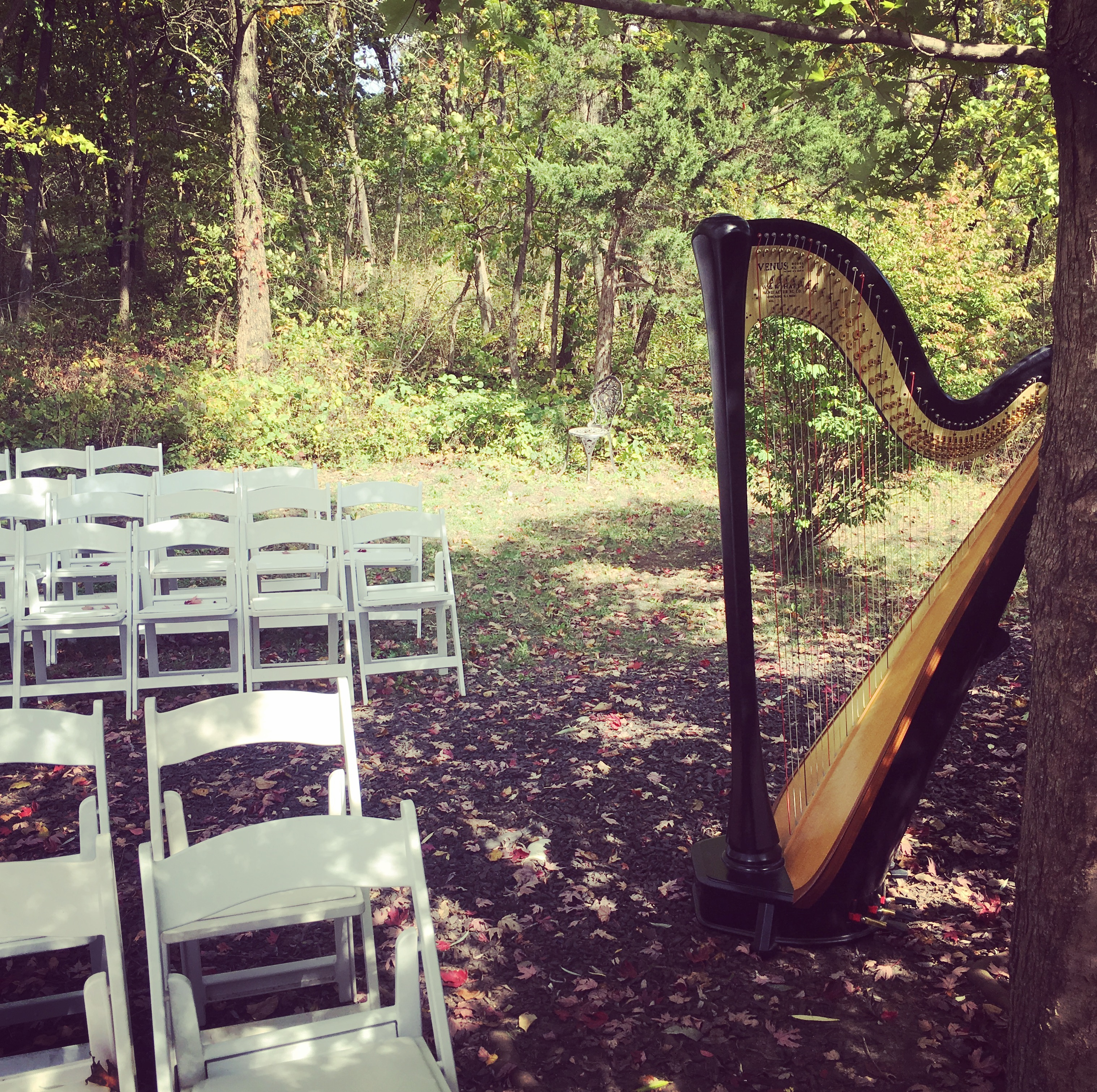 Bollywood Harpist & Wedding Music