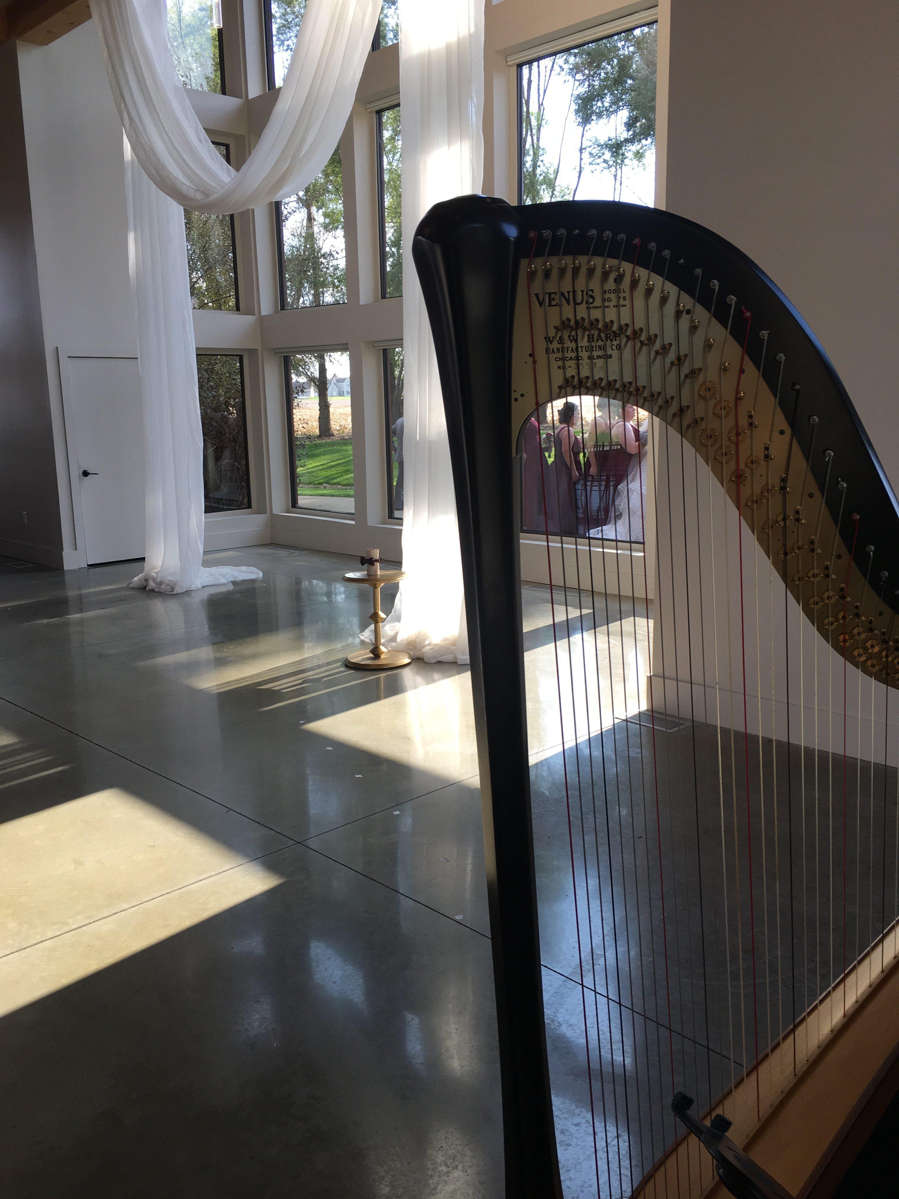 Champaign Harp Player
