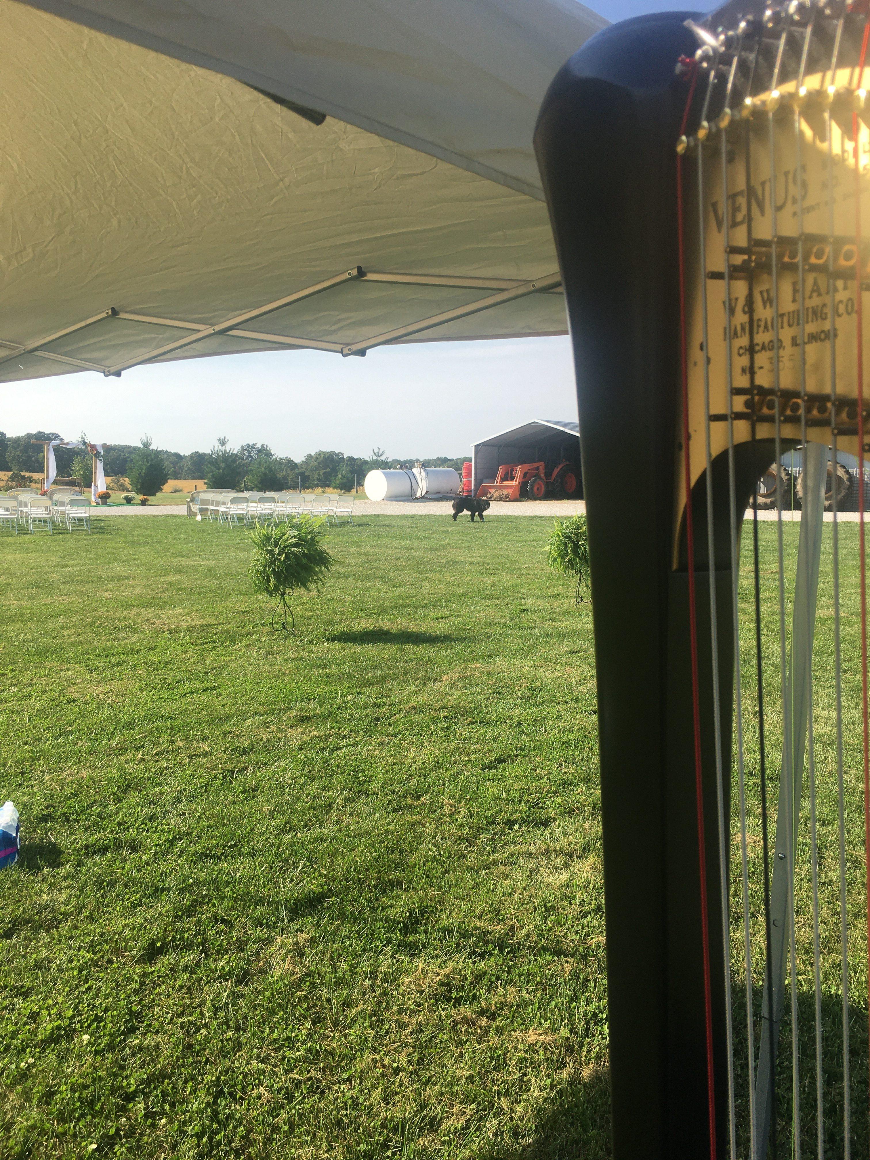 Harp Player St. Louis